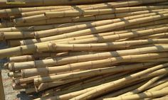 Quality Bamboo and Asian Thatch: Bo Bamboo Pole#001- Bamboo cane (10.ft)x3''-5' 'in diameter /Bamboo Fence/Bamboo Wedding Arbor/Bamboo Tiki ...