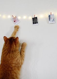 Don't let kitty get to your Christmas fairy lights! #instax