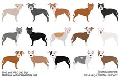 Pitbull dogs digital clip art for Personal and by Giftseasonstore