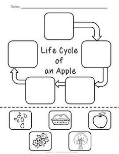 Nursing Notes Discover Life Cycle of an Apple {FREEBIE} Life Cycle of an Apple (could cut and paste to do life cycle of butterfly plant etc. Fall Preschool, Kindergarten Science, Science Classroom, Teaching Science, Science For Kids, Classroom Activities, Sequencing Activities, Teaching Resources, September Preschool