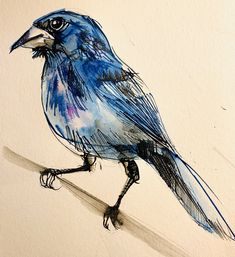 """Rachel Collier-Wilson Creative With Line 🏳️🌈 on Twitter: """"So for U is for Ultramarine Grosbeak..a quickie sketch! #AnimalAlphabets @AnimalAlphabets… """" Blue Jay, Sketch, Bird, Twitter, Creative, Animals, Sketch Drawing, Animales, Animaux"""