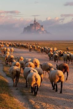 Abbey of Mont Saint Michel Normandy Mont Saint Michel France, Le Mont St Michel, Saint Michael France, Beautiful World, Beautiful Places, Beau Site, Normandy France, Ville France, French Countryside