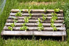 Re-using pallets for horticulture plans is a superb method to move waste materials from trash dumps.