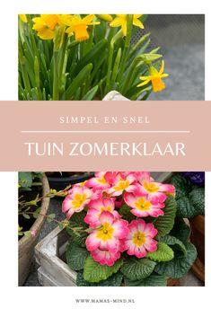In enkele stappen maak je je wintertuin in de lente zomerklaar! Tips, Plants, Lawn, Tulips, Plant, Planets, Counseling