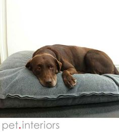 Stylish dog cushion Divan Uno, high end latex filling, longlasting, outstanding quality