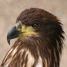 Bird of Prey | Endless Wildlife
