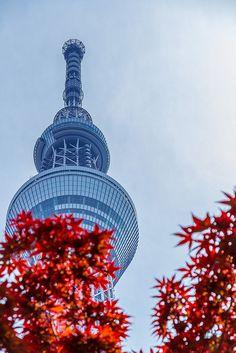 Tokyo Sky Tree, Japan - travel the world Tokyo Skytree, Visit Tokyo, Acer Palmatum, Tokyo Tower, Island Nations, Travel Memories, Tokyo Japan, Japanese Culture, Japan Travel