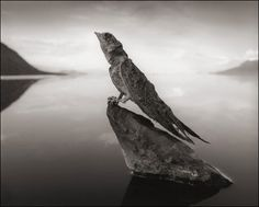This Lake Turns Any Animal That Touches It Into Stone Nick Brandt