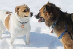 WagAware Ambassadors Lucy (left) and Betty (right) enjoying some time playing in the snow! Go girls!