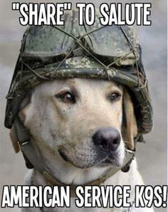 Dogs served our country to they should have some credit. Please share comment and like to spread the word.