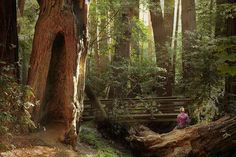 The Pfeiffer Falls Trail, California