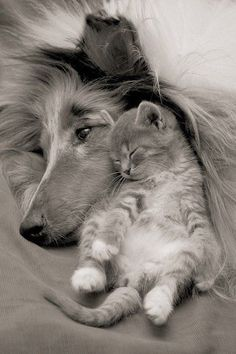 reminds me of my old dog lucky who was a collie and my cat when she was little memories that shall never be forgotten