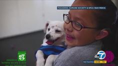 Video shows incredible bond as girl teaches deaf dog sign language  #Dogs