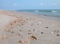 #Hatteras Island has many great spots for beachcombing! http://www.shorevacationsobx.com/