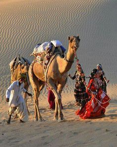 The sand dunes of Jaiselmer, Rajasthan. Camel and his herder along with Kalbelia dancers.