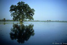 © Alison M. Jones #water #blue #reflection #trees #nature