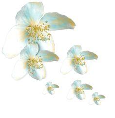 Beyaz çiçekli png susler Arkafon seffaf 2, Sayfaları süslemek için beyaz çiçekler güller, arkafon seffaf beyaz çiçekli sayfa süsleri, karışık…