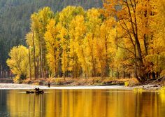 The fall colors are in full display today, October 16, 2012, in my beautiful Bitterroot Valley of Montana!