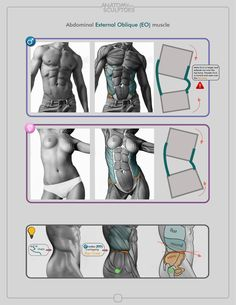 ✤ || CHARACTER DESIGN REFERENCES | 解剖 •  علم التشريح • анатомия • 解剖学 • anatómia • एनाटॉमी • ανατομία • 해부 • Find more at https://www.facebook.com/CharacterDesignReferences & http://www.pinterest.com/characterdesigh