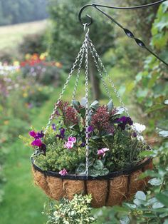 Winter hanging basket...going to do this soon.
