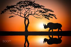 Rhino - Story Untold - This the last of of the Africa series.  Thank you for…