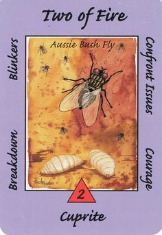 2. Fire (Bush Fly) Australian Animal Tarot Deck.  You need to confront the issues NOW and have the courage to face things.