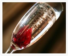 champagne_hibiscus_2