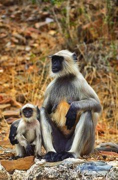 Parenting  #animal