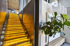 Steel Structure, Concrete Wall, Entrance, Stairs, Flooring, Glass, House, Design, Home Decor