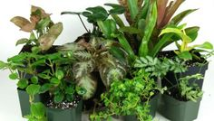 Picking the Perfect Plants: Artificial vs Real Plants