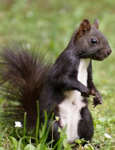 Free Image on Pixabay - Squirrel, Nager, Cute, Animal Forest And Wildlife, Forest Animals, Free Pictures, Free Images, Dame Nature, Animal Crafts For Kids, Sea And Ocean, Animals Images, Animal Quotes