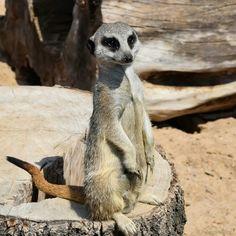 #surokatka #zoosafarii #Borysew