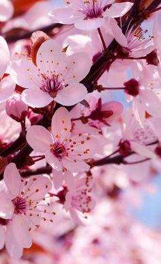 Wallpaper Iphone Spring Textures En 2019 Fleurs Fleur De