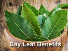 There are highly effective anti-inflammatory, anti-cancer and also anti-oxidant benefits, and its full of nutrition that offer detox-support together with numerous additional essential nutrients that promote excellent health. Bay Leaf Tea Benefits, Green Tea Benefits, Bay Leaves Uses, Pomegranate Benefits, Watermelon Health Benefits, Laurel Leaves, Laurel Tree, Turmeric Water, Coconut Benefits