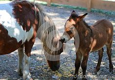 Photo about Pony with cubs at shade in paddock. Image of foal, playpen, nature - 77422115 Playpen, Cubs, Pony, Horses, Stock Photos, Nature, Animals, Image, Pony Horse