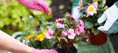 top money saving gardening tips