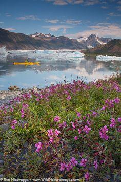 Kayaking at Bear Glacier, Kenai Fjords National Park, Alaska.