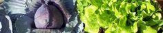 Louisiana Community Gardens | Community Gardening Info You Need!