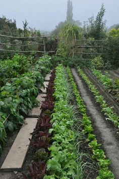 Use wooden planks between rows.
