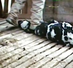 This is the milk industry- Where is the humanity. We are still savages.