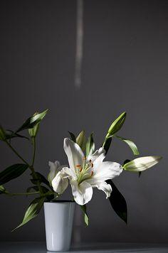 white lily by Nicole Franzen Photo, via Flickr