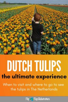 Tulip fields in Holland, when and where? & De Keukenhof gardens are a wonderful place to see the iconic Dutch tulips, but did you know you can organize a tulip tour on your own? If you prefer budget travel, there are lots of places in The Netherland Europe Travel Tips, European Travel, Budget Travel, Places To Travel, Places To See, Travel Destinations, Travel With Kids, Family Travel, Visit Holland