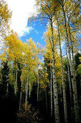 Lynard Stroud - Sun in the Trees