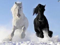 white shire horse and black friesian stallion- beautiful horses All The Pretty Horses, Beautiful Horses, Animals Beautiful, Majestic Animals, Beautiful Creatures, Black Horses, Wild Horses, Dark Horse, Horse Photos
