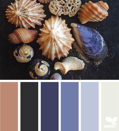 Shelled Tones l Coastal Color Palettes l www.DreamBuildersOBX.com