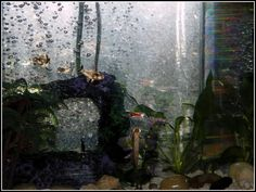 FISHES photo