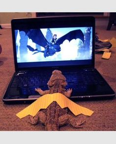 Bearded Dragons Have Dreams Too