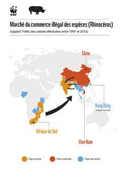 Marché du commerce illégal de rhinocéros. Depuis 2008 le braconnage s'est intensifié avec 83 rhinocéros tués, pour atteindre en 2011, le nombre record de 448 animaux abattus. Et 2012 devrait exploser ce record ...