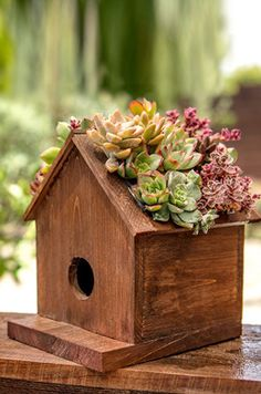 This pine wood Birdhouse has a plantable roof which is a cute way to display your succulents. It has a small container on top with a plastic liner to keep the soil and water out of the birdhouse. Plant a mix of hardy succulents, hens & chicks, sedum Succulent Planter Diy, Succulent Landscaping, Succulent Soil, Wood Planter Box, Wood Planters, Succulents Garden, Faux Succulents, Homemade Bird Houses, Bird Houses Diy
