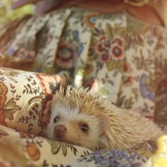 I would love a hedge hog